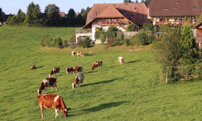Swiss Reject Bids to Improve Food Quality, Protect Farmers