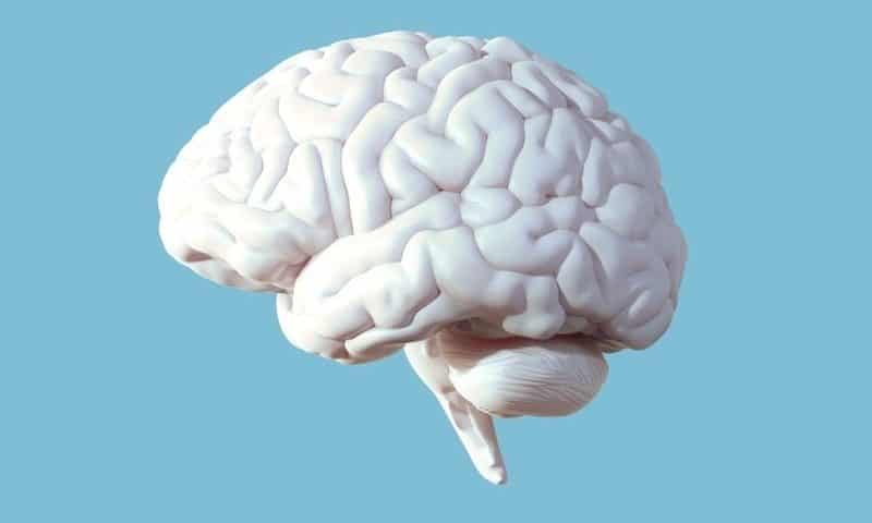 Controlling Alzheimer's by targeting immune signaling between brain cells